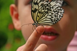 Butterfly and boy trust